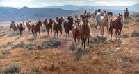 Cow Horse Country by Tim Cox