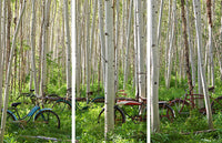 Aspen Herd Triptych by Todd Van Fleet