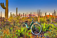 Saguaro National Park by Todd Van Fleet