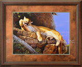 Cats Bath – Framed Print by Tom Mansanarez