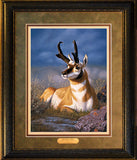 Desert King – Framed Print by Tom Mansanarez