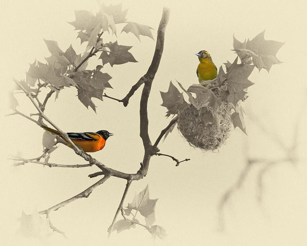 Baltimore Orioles Art Prints by James Brown