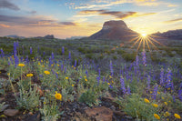 Big Bend Bluebonnet Sunrise Art Prints by Rob Greebon Artist