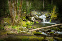 Creekside in the Smokies Art Prints by Jason Clemmons