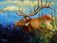 From the Woods - Art Prints by Terry Lee