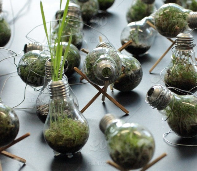 earth day bulbs