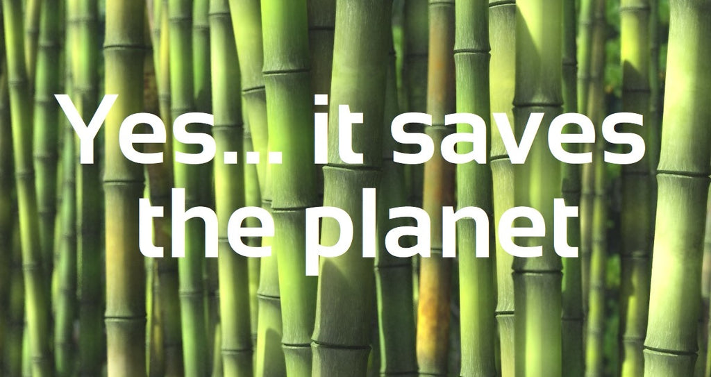 Bamboo Is Saving the Planet: Things You Must Know