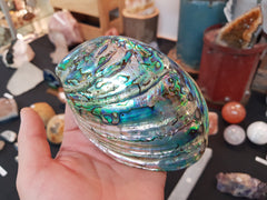 Paua Shell polished - Earth's Treasures