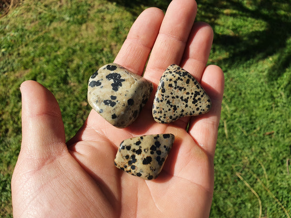 Dalmation Jasper Tumble XL