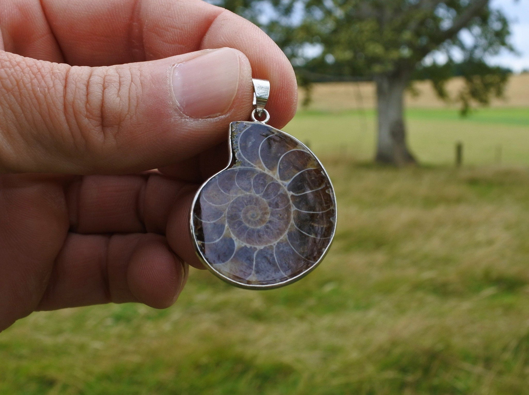 Ammonite Fossil Pendant - Earth's Treasures