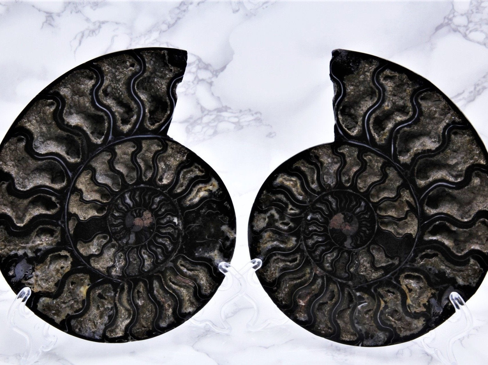 Black Ammonite Pair Large - Earth's Treasures