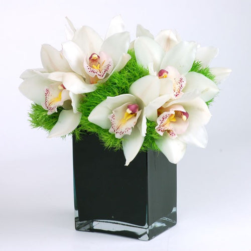 White Orchid For The Desk