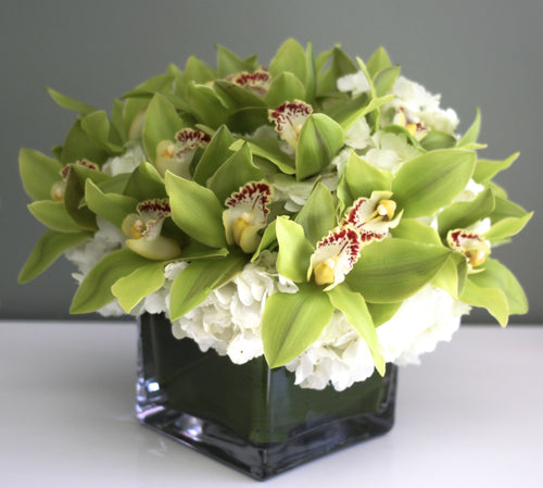 Green Orchids in a Vase
