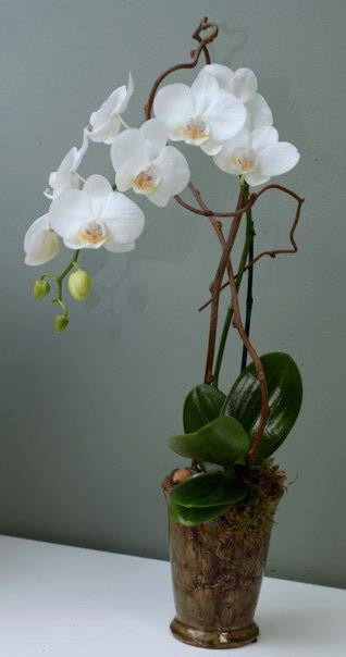 Mini White Orchids