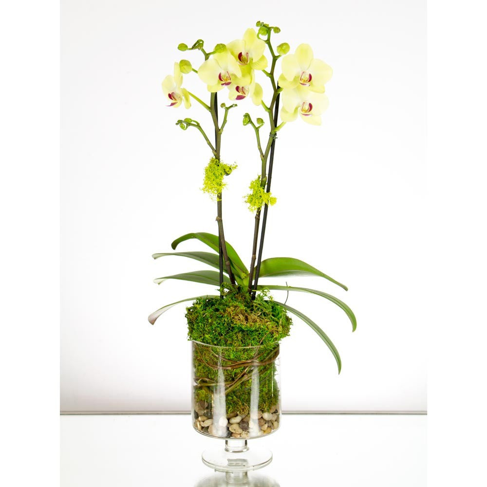 Yellow Orchid in a Glass