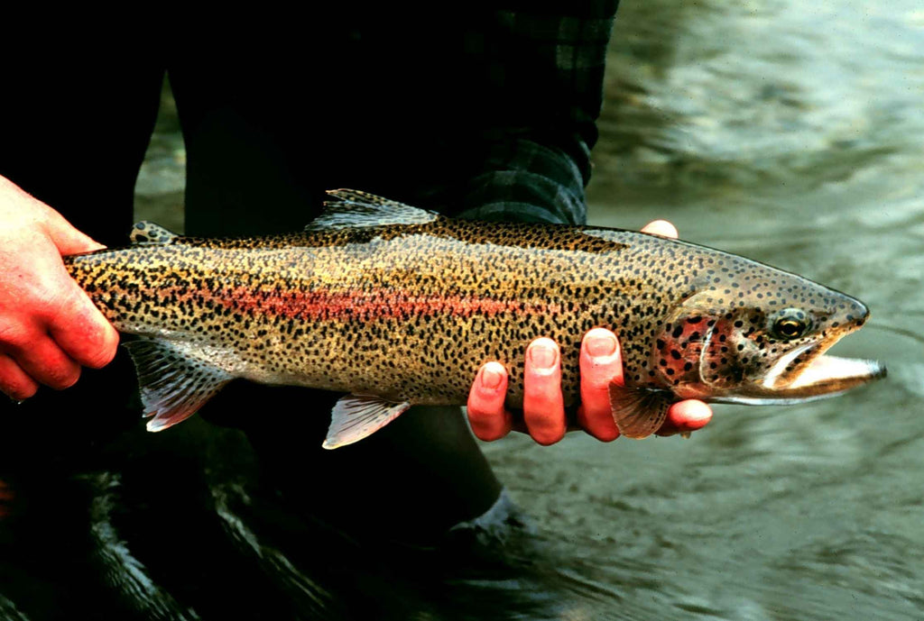 FLY FISHING: THE ANSWER TO WORLD PEACE?