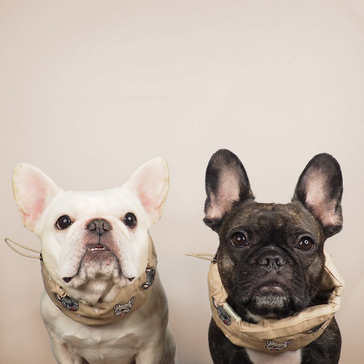 Frenchie Love Cool Snood