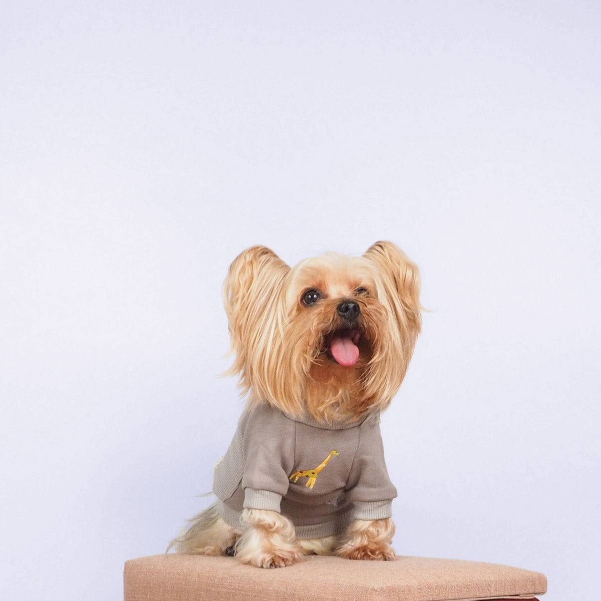 Yorkshire Terrier Dog Clothes