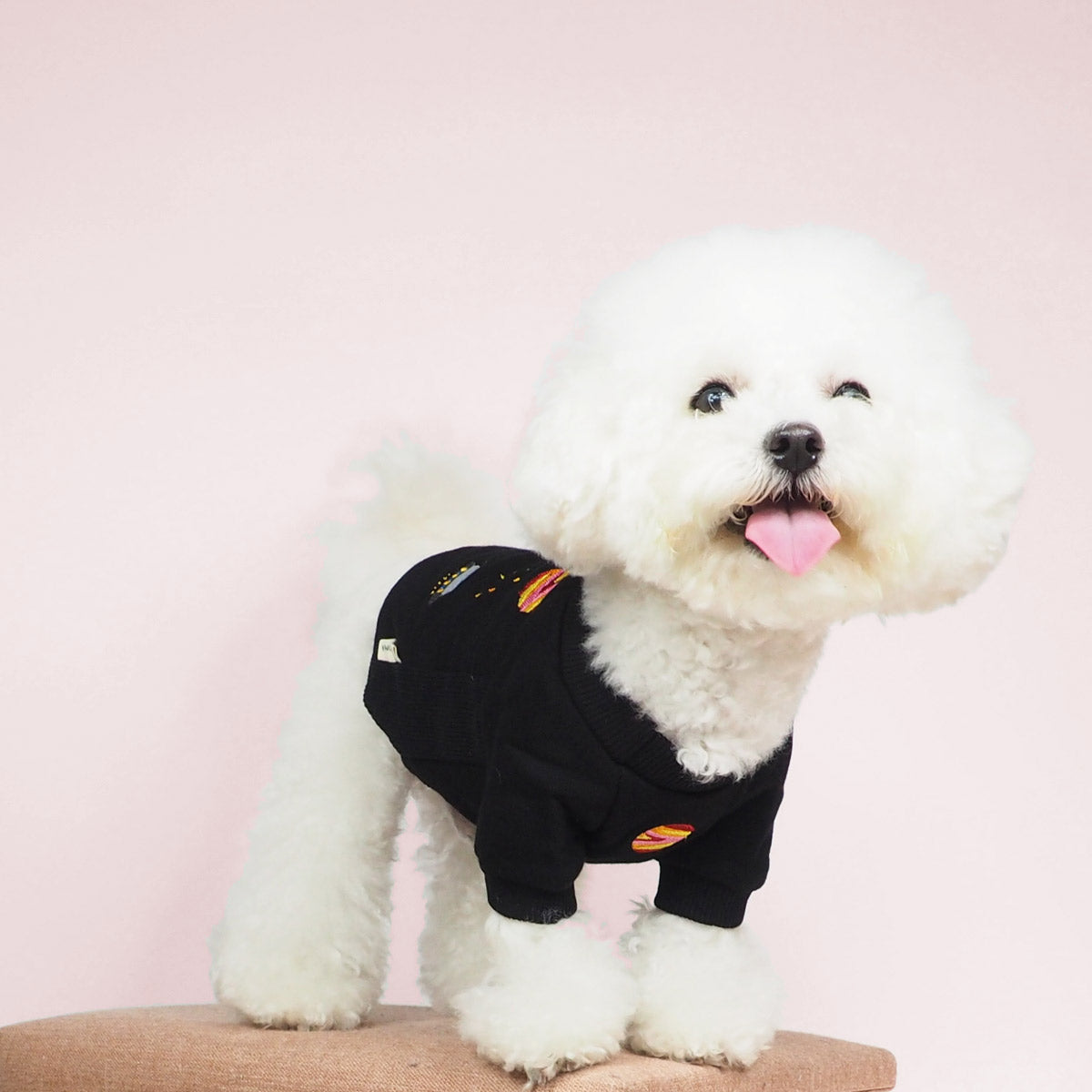 Bichon Dog Clothes