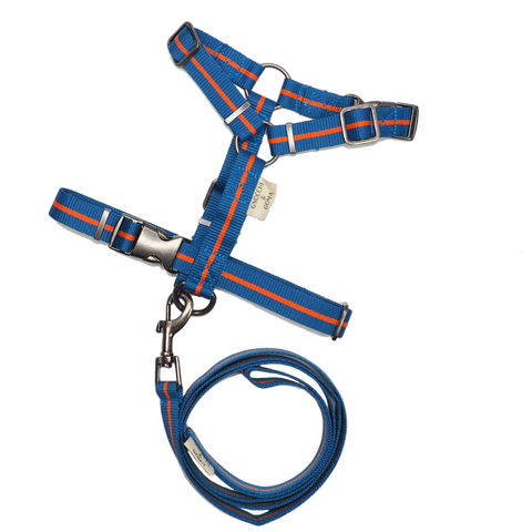 Duo Buckle Strap Harness Set - Blue/Orange