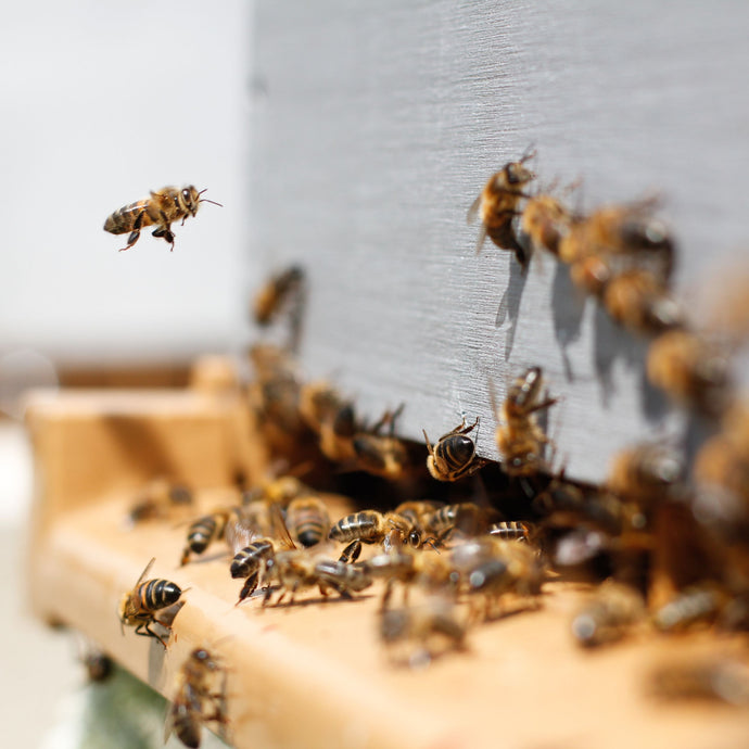 Bees Need Your Help! 10 Things You Can Do