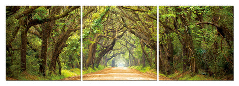 Baxton Studio Tunnel of Trees Mounted Photography Print Triptych-Wall Decorations-HipModernHome