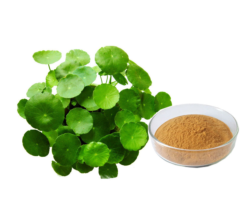 Gotu Kola - Centella Asiatica - Natural Ingredients for skin at Forest Homes