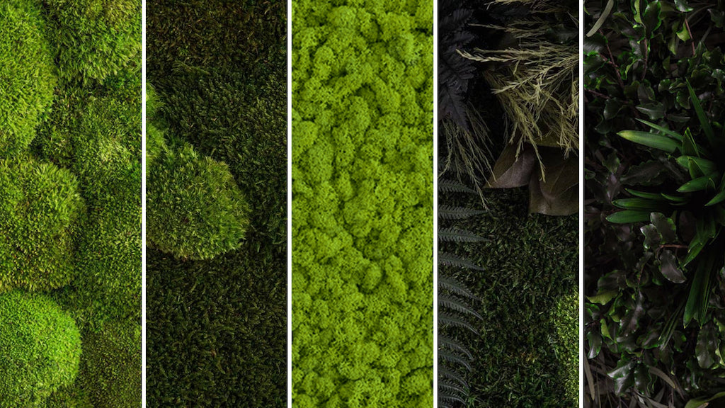 Types of Greenery Plant Wall Art Forest Homes
