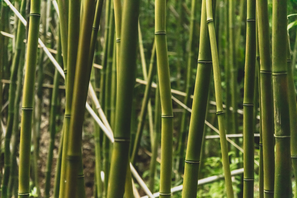 Bamboo good for the environment | Forest Homes
