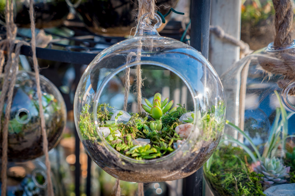 Growing plants in your Forest Homes Terrarium