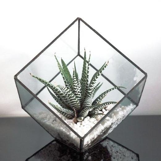 nature Home Flora, Aloe Polyphilla Terrarium, beautiful natural decor, nature inspired designs, best home decor, Forest Homes
