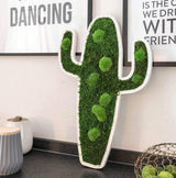 Forest Moss Cactus Pictures
