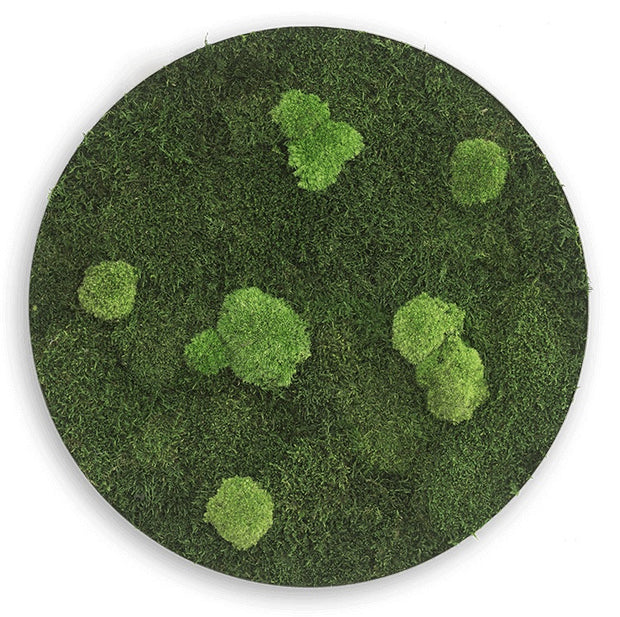 nature Wall Decor, Forest Circle Moss Wall Art, beautiful natural decor, nature inspired designs, best home decor, Forest Homes