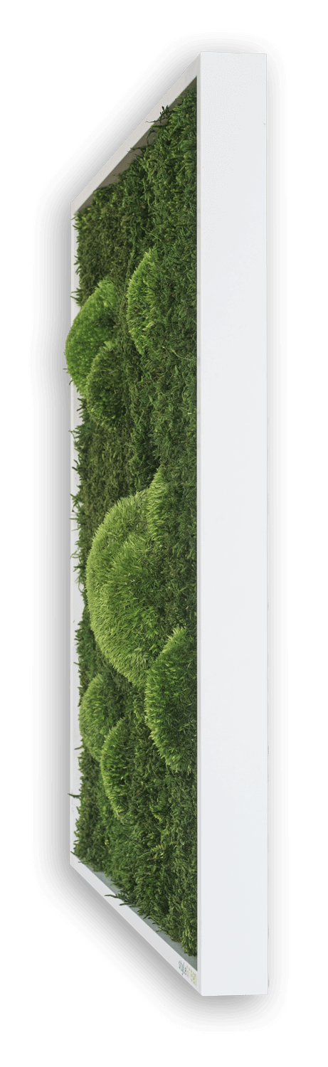 nature Wall Decor, Forest Square Moss Wall Art, beautiful natural decor, nature inspired designs, best home decor, Forest Homes