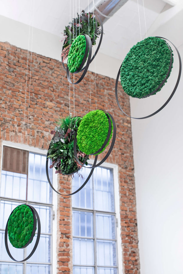 Hanging Plant and Moss Rings