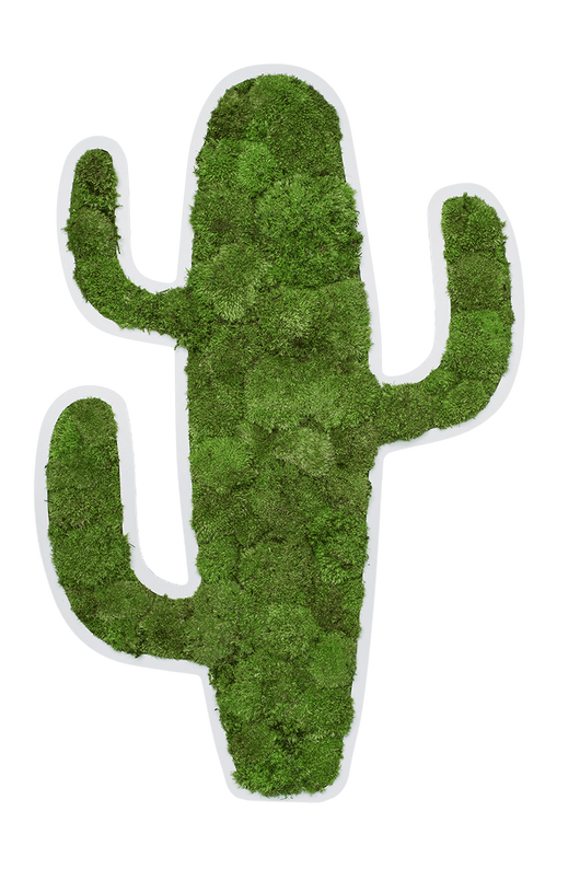 Green Moss Cactus Picture