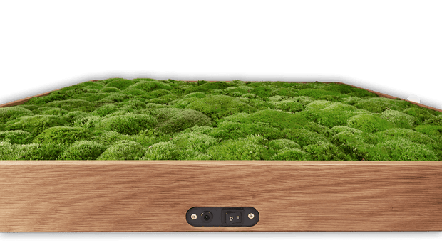 nature Sound Effects, Moss Best Wall Speaker, beautiful natural decor, nature inspired designs, best home decor, Forest Homes