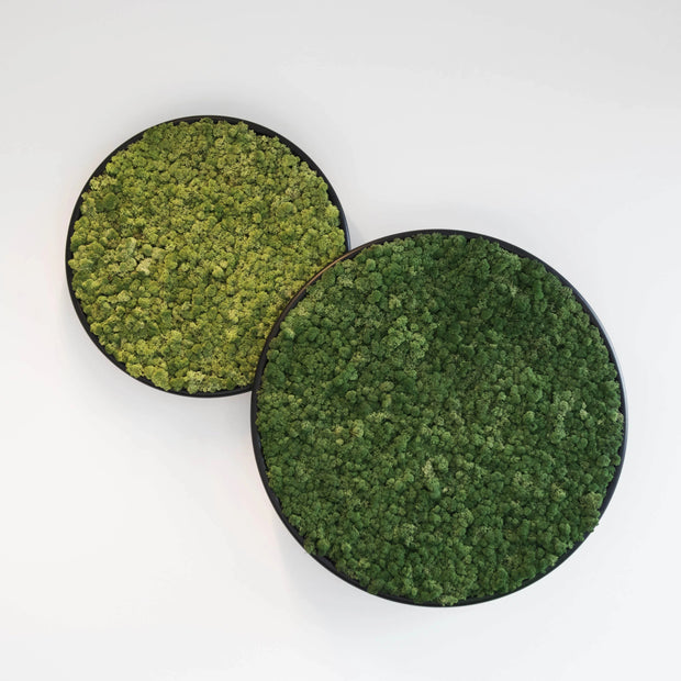Plant and Moss Circles