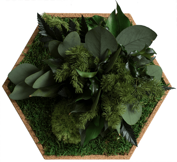 nature Wall Decor, Alpine Moss Hexagons (Set of 9 Moss Panel), beautiful natural decor, nature inspired designs, best home decor, Forest Homes