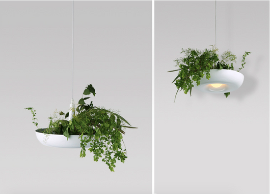 inspired lighting. Nature Inspired White Cedar Hanging Lights, Beautiful, Unique Lighting,  Forest Homes, Natural Lighting