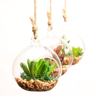 Sugi Bubble Terrarium, Beautiful, unique Home Flora, Forest Homes, Home Natural Decor, Nature inspired Design