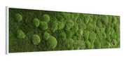 nature Wall Decor, Wide Merging Moss Wall Art, beautiful natural decor, nature inspired designs, best home decor, Forest Homes