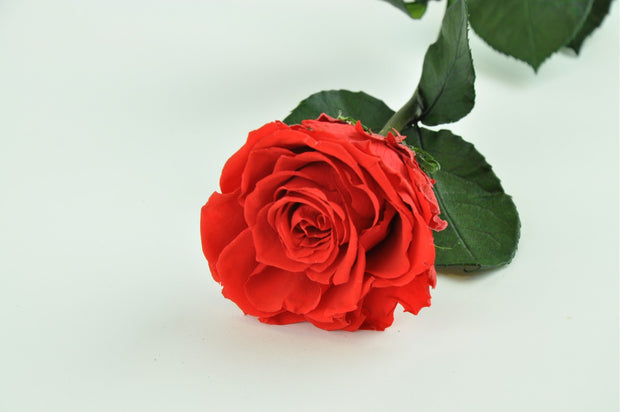 Preserved Red Roses Bouquet (12-18 un)