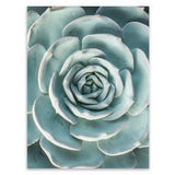 nature Wall Decor, Echeveria Glauca Canvas Prints, beautiful natural decor, nature inspired designs, best home decor, Forest Homes