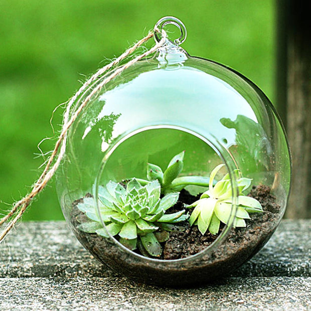 nature Home Flora, Sugi Bubble Terrarium, beautiful natural decor, nature inspired designs, best home decor, Forest Homes