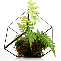 Nature decor, Home Flora, Aloe Polyphilla Vase Terrarium, Beautiful Natural Decor, Nature inspired Design, home decor, Forest Homes