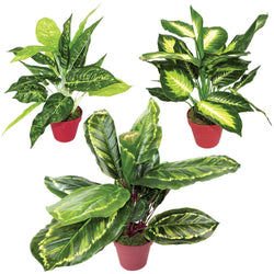 Artificial Potted Pot Plant Dieffenbachia Calathea Veitchiane Plastic Imitation