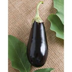 Eggplant Italian  9 pack- IN STORE PICK-UP ONLY