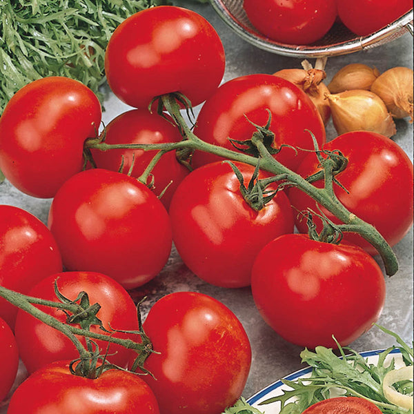 Tomato Better Boy 9 pack- IN STORE PICK-UP ONLY