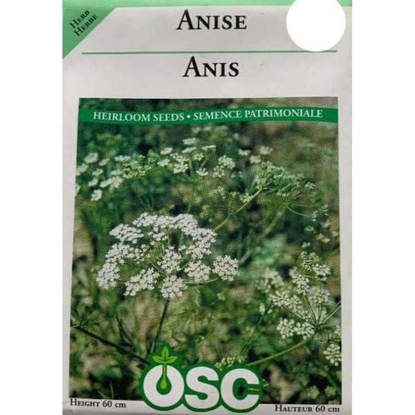 Herb Seeds- Anise